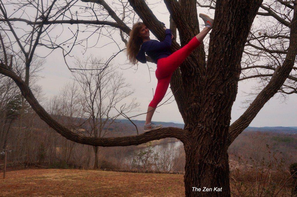 the zen kat in a tree