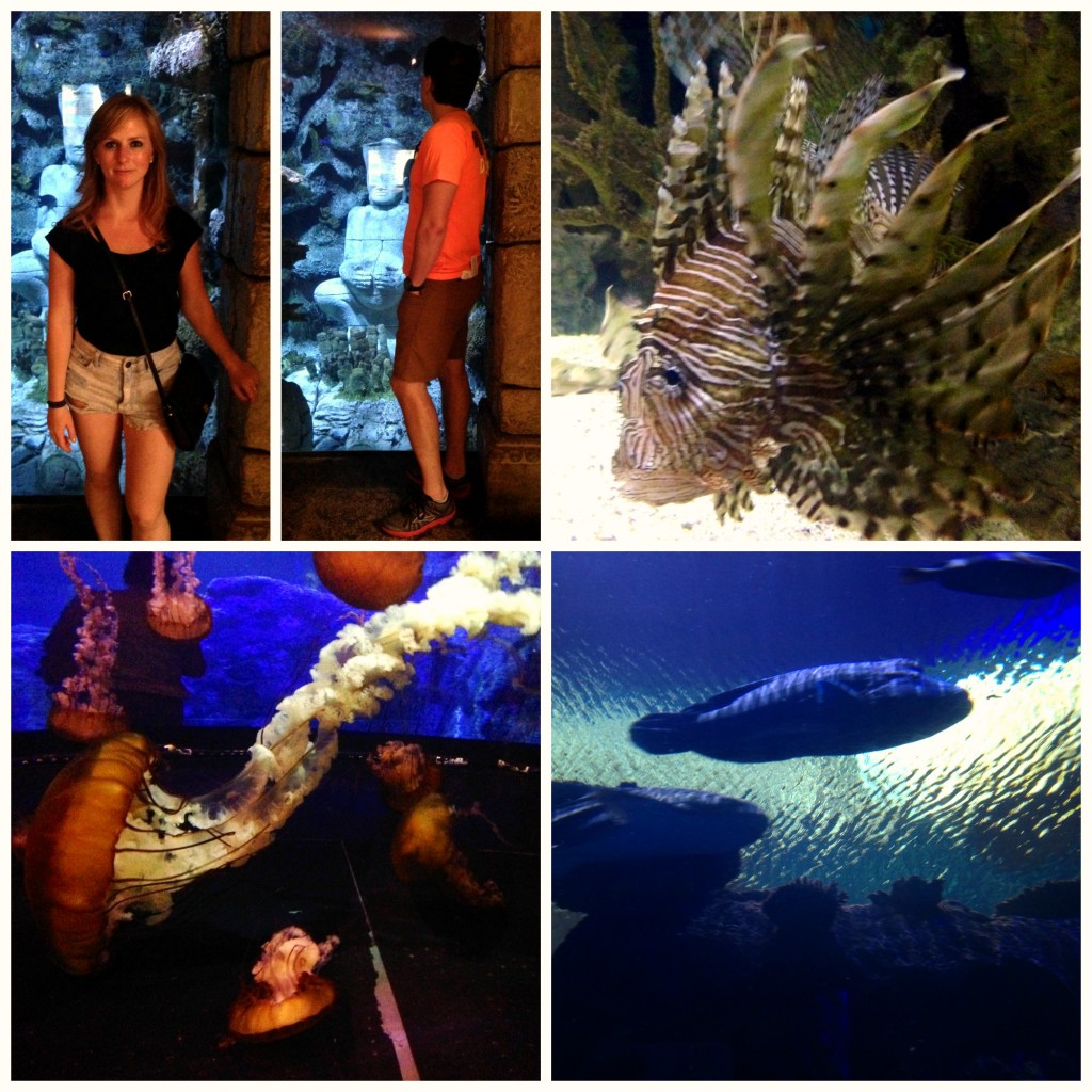 Mandalay Bay Aquarium