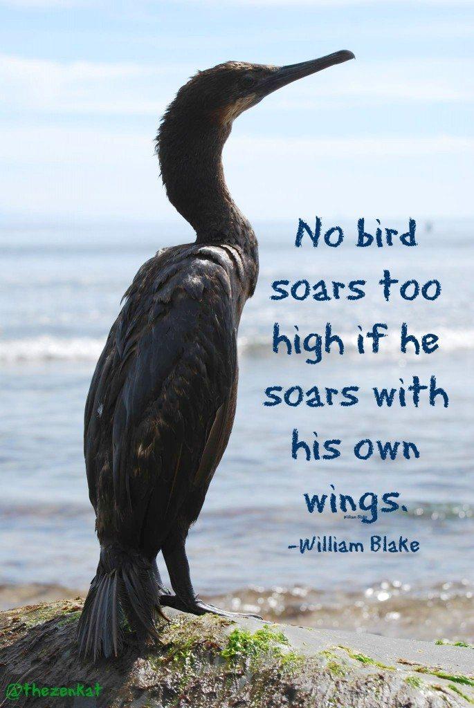 bird_quotes