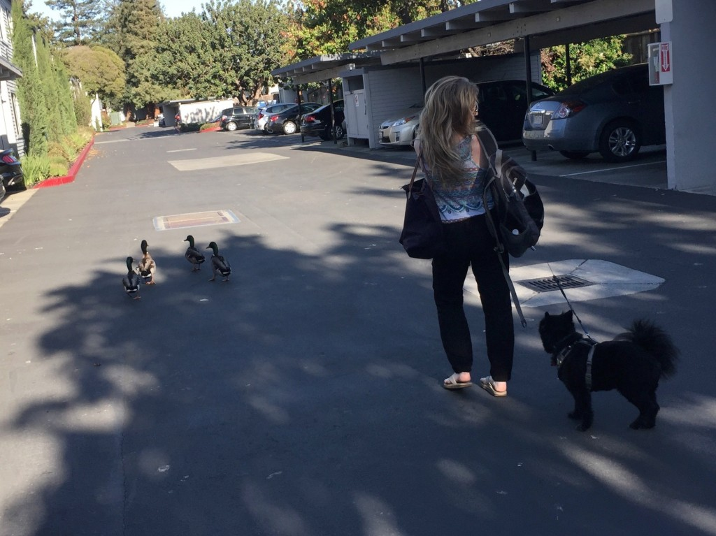 dogs_and_ducks