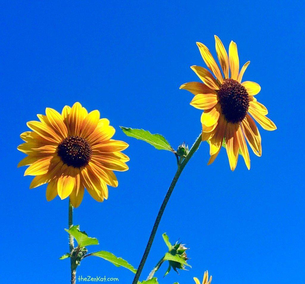 flowerphotograph